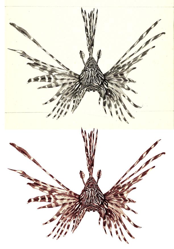 Ilustración pez escorpión